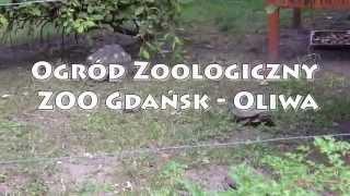 Ogród Zoologiczny ZOO Gdańsk - Oliwa - 21.08.2014