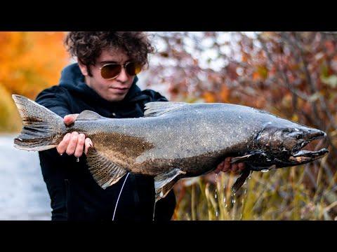 Montreal Salmon??? Rare Catch!