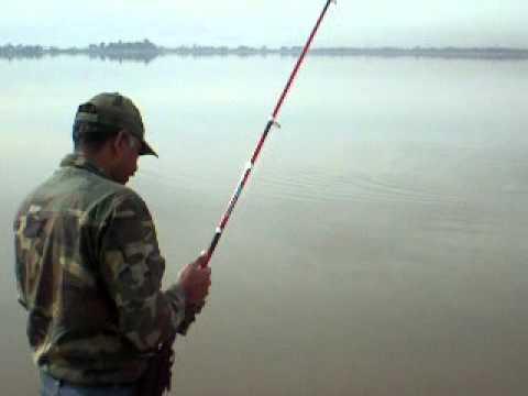 Rawal Lake Carp Catch
