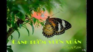 Cánh Bướm Vườn Xuân - Sáo trúc