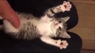 Funny Cat Videos  Surprised Baby Kittens  Cute Kittens Compilation 2016