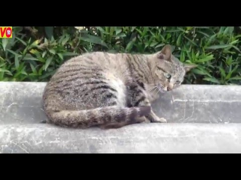 The cute cat, best cats breeds video funny 2016 II cats hot nose 4k