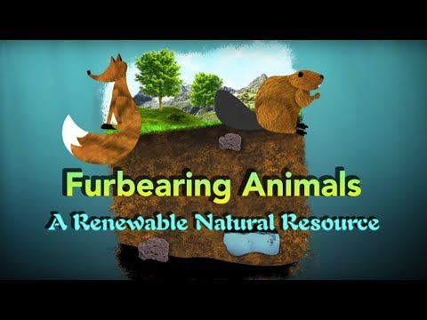 Furbearing Animals: A Renewable Natural Resource