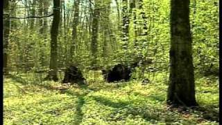 Typy siedliskowe lasów - LASY