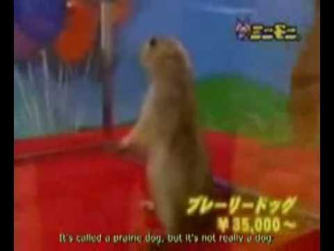 Original Dramatic Chipmunk