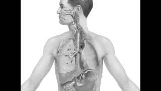 Fearless Eye, Inc. -Elementis v. Johnson:  Chromium(VI) Reduction Locations by Human Body animation
