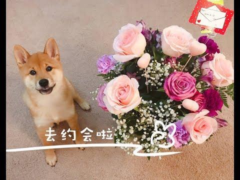 Moko's Puppy Play Date!
