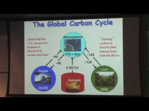 The Global Carbon Cycle - Ian Baker