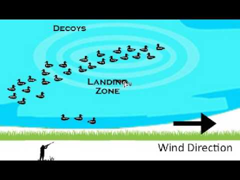 How To Setup Diver Duck Decoys