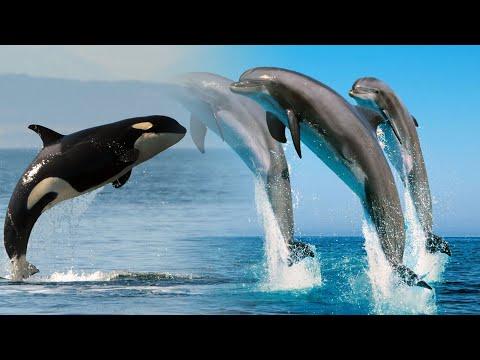Что пьют дельфины и киты? если вокруг солёная вода.