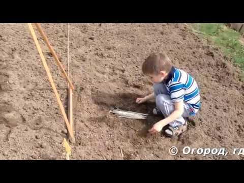 Привычный способ посадки огурцов в открытый грунт с укрытием.