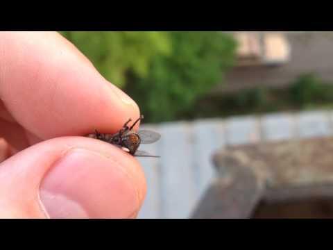 Как появляются мухи видео