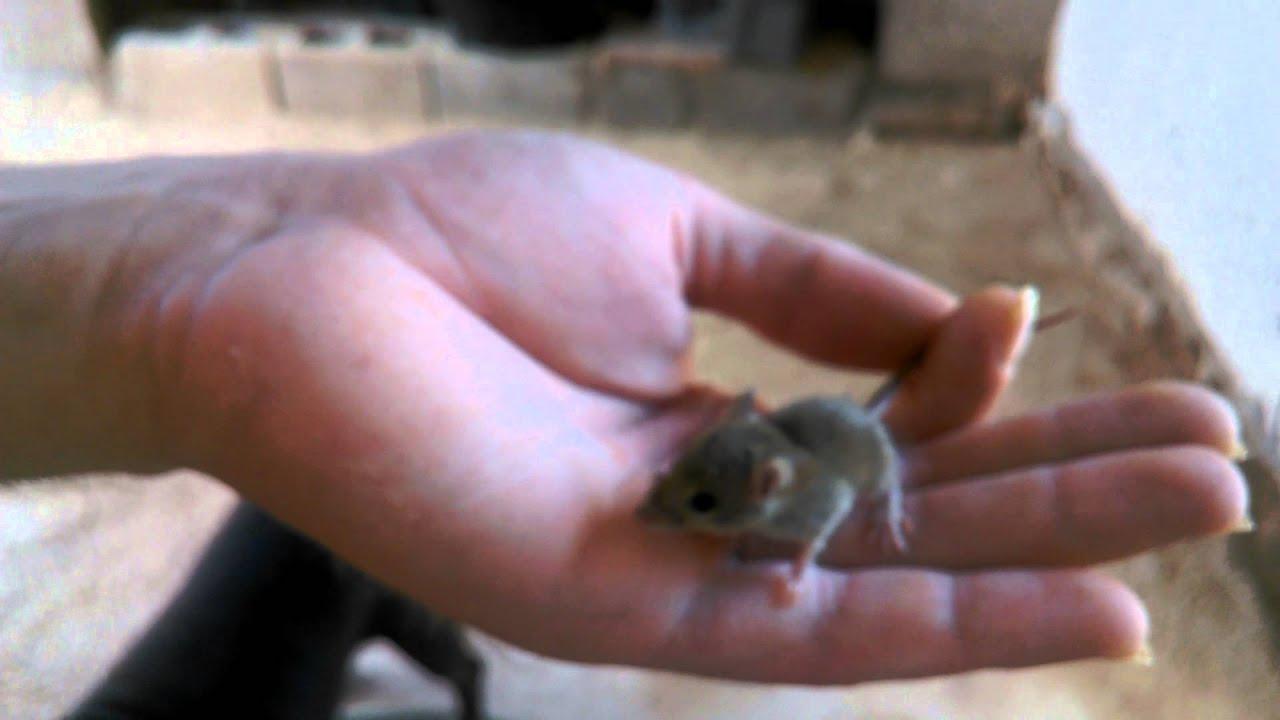 Tengo ratones en casa awesome dnde se esconden los ratones tengo una plaga with plaga de - Ratones en casa eliminar ...