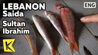 【k】lebanon Travel-saida[레바논 여행-사이다]어시장에서 본 황제생선 술탄 이브라힘/sultan Ibrahim/fish Market/fish/port/shark