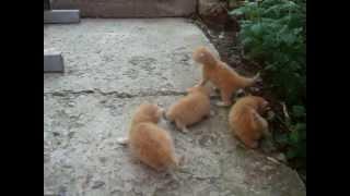 оранжевые коты зовут маму