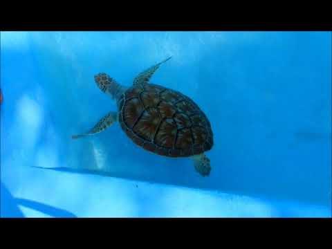 Cayo Largo's Marine Turtle Rescue Center, Cuba