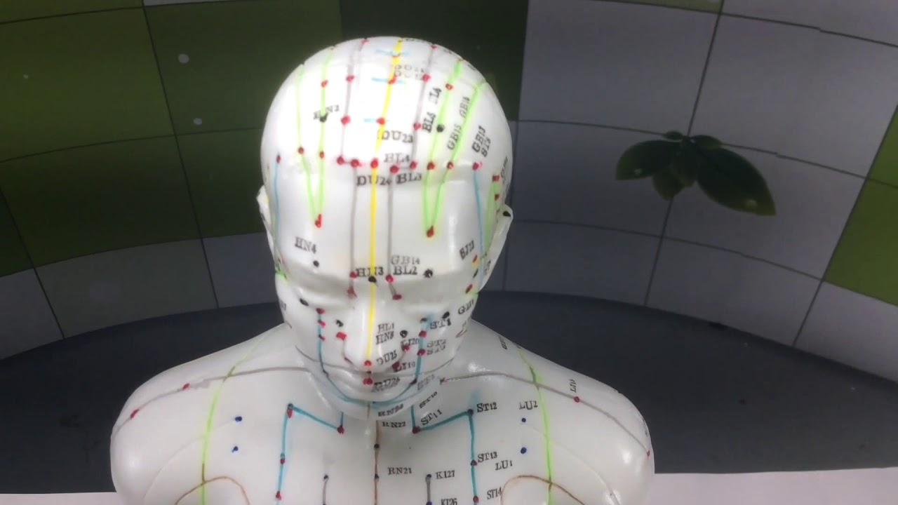 Male Acupuncture Model 50cm from Lierre ca