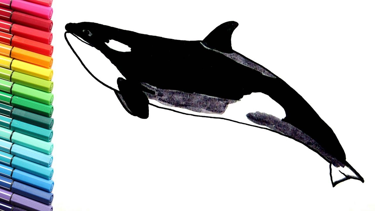 drawing and coloring orca killer whale sea animals learning