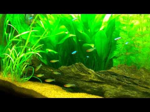 aquarium juwel vision 260 discus youtube. Black Bedroom Furniture Sets. Home Design Ideas