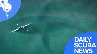 Daily Scuba News - Sneaky Great White Scares Scuba Diver