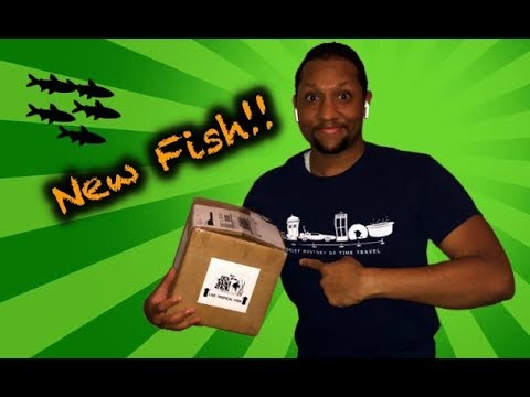 Unboxing New Fish From The Wet Spot