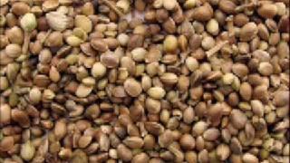 Macc & John Atterbury - Seeds