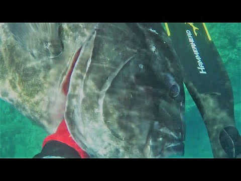 Spearfishing Hawaii 1 : Into The Shallows ( Including My BIGGEST Fish )