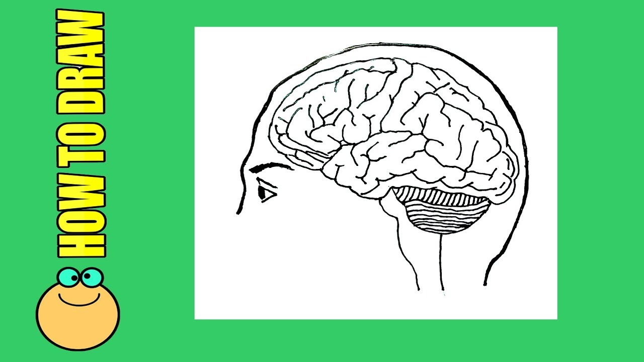 10 48 MB] How to draw Brain diagram easily,Simple brain