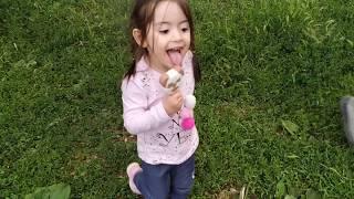 Ayşe Ebrar ve Asel Pandalı Dondurma Aldı Aselin Dondurması Yere Düştü!!