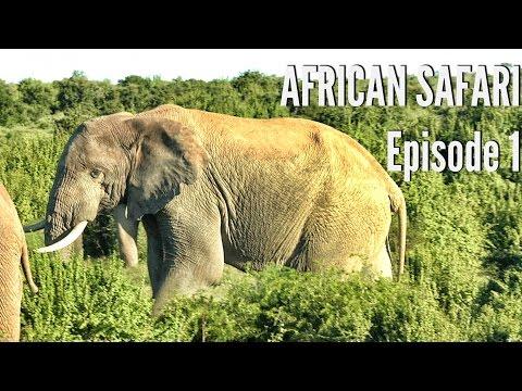 Black Wildebeest, Hartebeest, And Gemsbok Hunting -