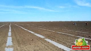 Высаживаем рассаду арбуза в грунт 10 05 2014(, 2014-08-19T15:56:09.000Z)