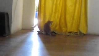 Котята ищут заботливые руки