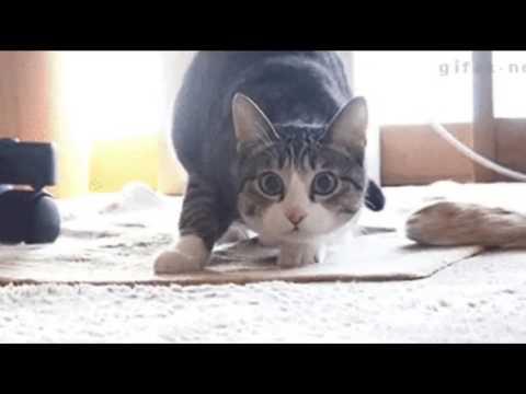 Bag Raiders - Shooting Stars (Cat Man 1 Hour edition)