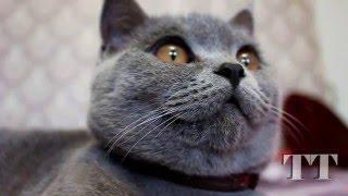 Глаза кота. Зрачки расширяются и сужаются. Cat Eyes. Kitten. Kätzchen. Augen.