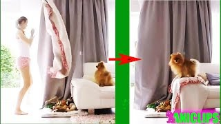 Dog and CAT react to Disappearing Magic Trick