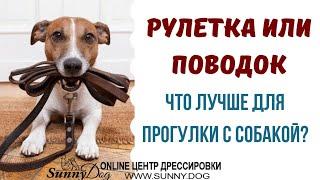 Поводок или рулетка - что лучше? Можно ли выгуливать собаку на рулетке? Правильная амуниция.