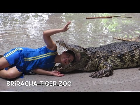 Scary Crocodile Show in Sriracha Tiger Zoo, Pattaya, Thailand