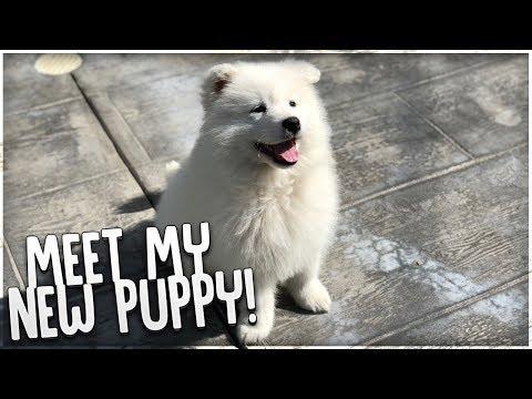 MEET MY NEW PUPPY!!