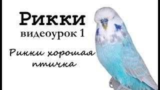 """Учим попугая Рикки говорить. Видеоурок 1: """"Рикки хорошая птичка"""""""