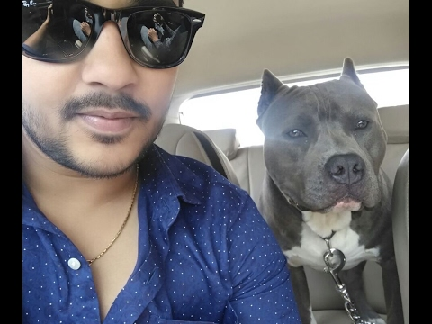 Pitbull American Bully In Punjab Do Subscribe Please Youtube