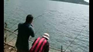 ตกปลาตะเพียนใหญ่-เขื่อนขุนด่าน 2 Fishing   (Java barb, Silver barb)