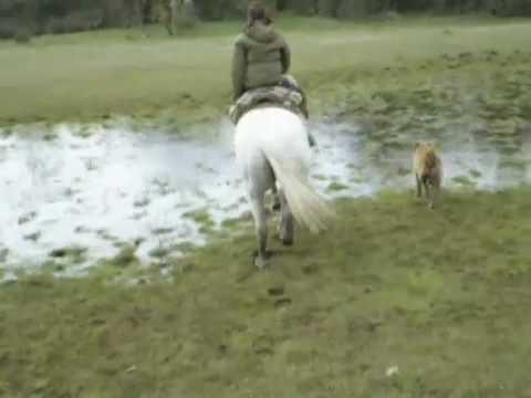 Horse Riding Patagonia 7