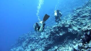 Shark & Buffalofish at Vertigo in Yap Island ヤップ島 検索動画 50