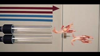 Реактивные креветки или как быстро пожарить креветки в кляре