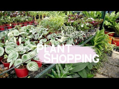 PLANT SHOPPING at GREEN MEADOWS (Philippines)    Plant Tour #3     #AynLovesPlants