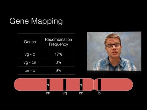 Genetic Recombination and Gene Mapping