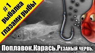 Рыбалка глазами рыбы.Подводная съемка.Карась.Поплавок.Резаный червь.Видео снято на Garmin  VIRB® XE
