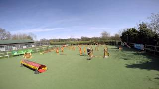 Puppy Jumping In Dachshund Agility Competition 2015