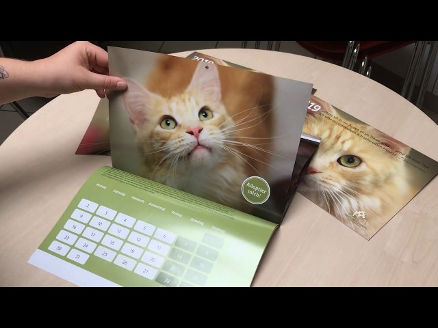 Tierheimkalender 2019
