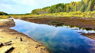 Это ШОК откуда здесь столько рыбы зарыбляем городское озеро